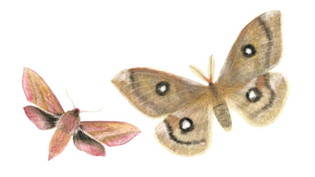 motýli_1
